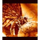 ButterflyNetRender 5 Professional Studio (Unlimited Nodes)